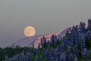 Mond_Egilsstadir_(Island)