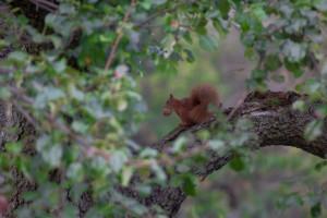 squirrel_